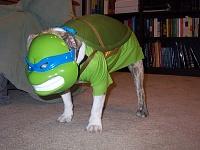 Нажмите на изображение для увеличения Название: Teenage-Mutant-Ninja-Turtles-Dog-Cosplay.jpg Просмотров: 8 Размер:73,0 Кб ID:87622