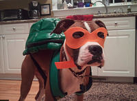 Нажмите на изображение для увеличения Название: dog costume.png Просмотров: 7 Размер:274,8 Кб ID:88157