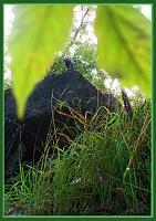 Нажмите на изображение для увеличения Название: 013 TMNT - Утёс.jpg Просмотров: 48 Размер:229,8 Кб ID:46029