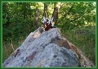 Нажмите на изображение для увеличения Название: 018 TMNT - Оседлал!.jpg Просмотров: 16 Размер:214,3 Кб ID:46034