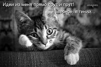 Нажмите на изображение для увеличения Название: kotomatritsa_p2.jpg Просмотров: 7 Размер:57,1 Кб ID:122676